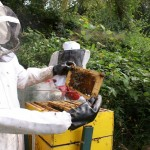 Honeycomb Maintenance