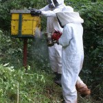 Bee Hive Management