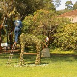 Pruning of Topiary